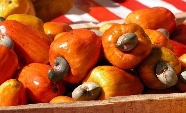 Cashew Nuts Raw Of Sơn Thành